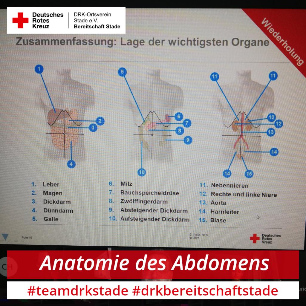 Anatomie des Abdomen